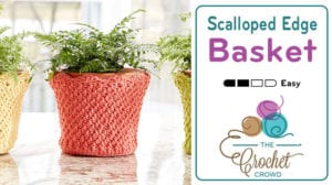 Crochet Scalloped Edge Basket / Flower Cozy