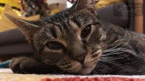 Binky Boo Kitty Cat