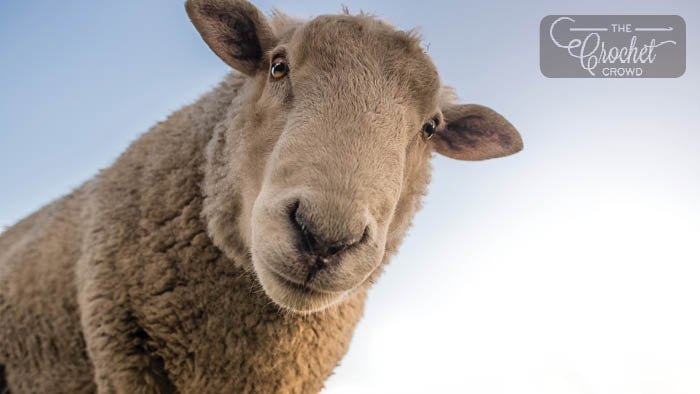What's The Differences in Wool?