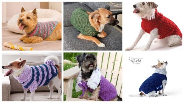 6 Cozy Dog Sweaters