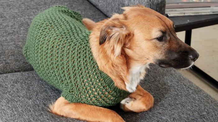 Crochet Dapper Pup Sweater