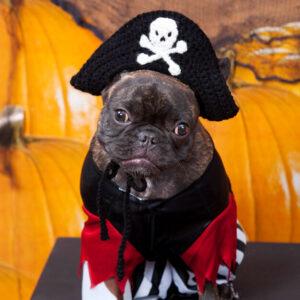 Crochet Puppy Pirate Hat
