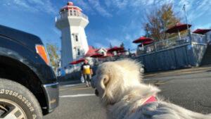 Masstown, Nova Scotia. Daniel Zondervan & PuppiDawg