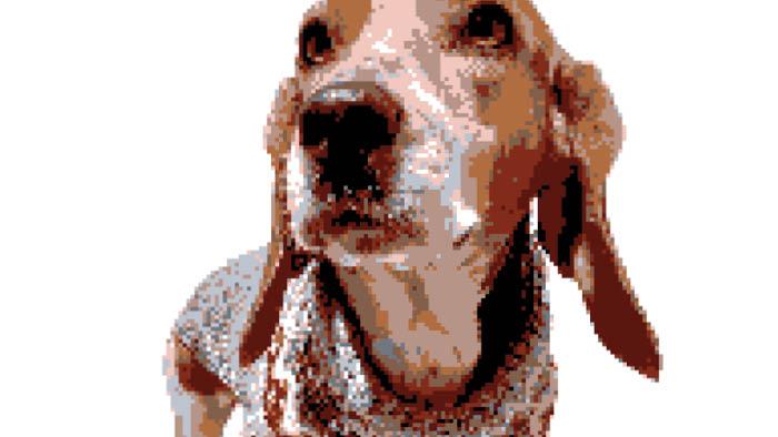 Bernard Grapghan Dog