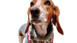 Crochet the Family Dog
